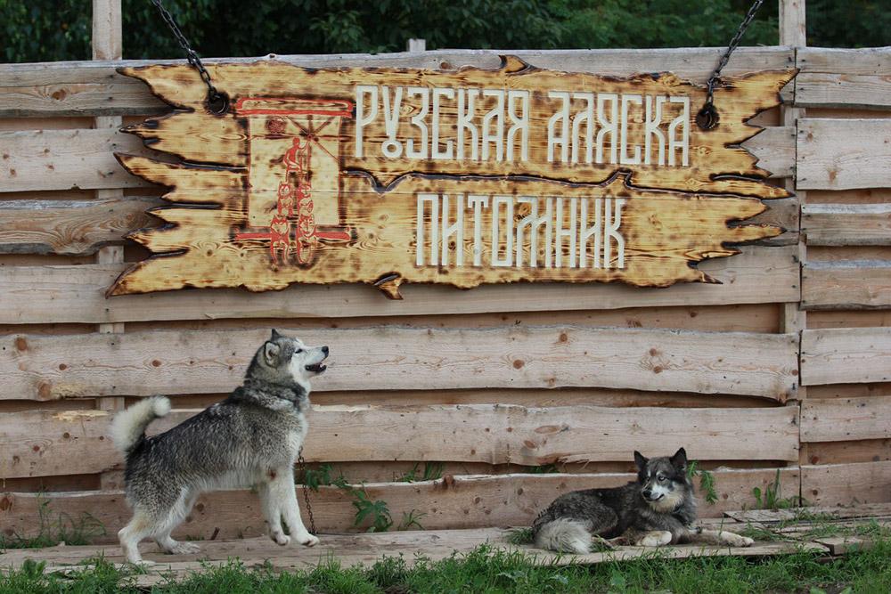 Путешествие в Хаскидеревню «Рузская Аляска»